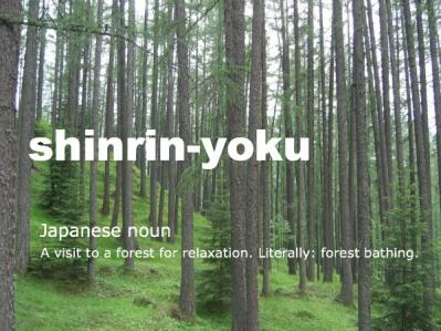 shinrinyoku.jpg
